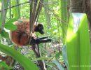 Tagesausflüge mit kleinen Kindern – Zoo Zürich